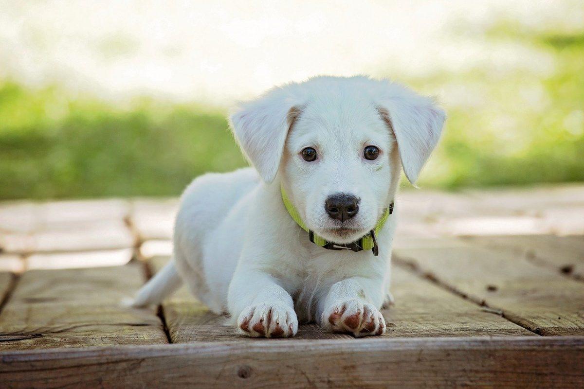 有必要做寵物絕育手術嗎?也許答案就在這